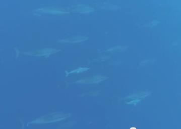 potapeni-s-delfiny-mauricius